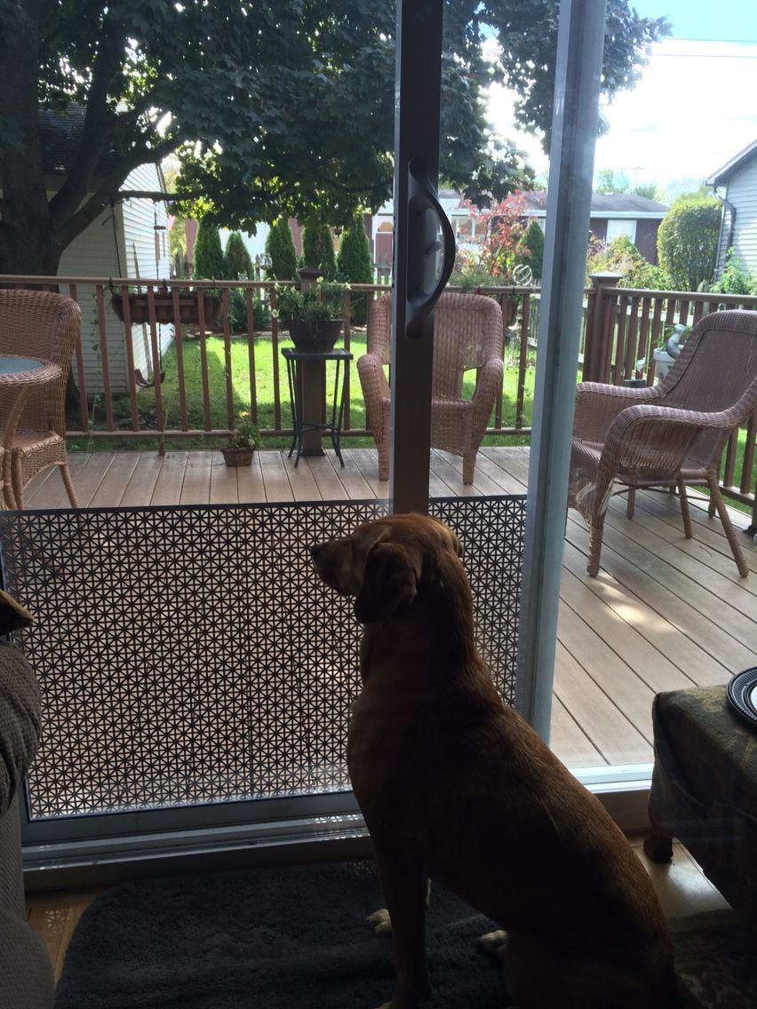 Decorative dog door screen guard made from ornate sheet