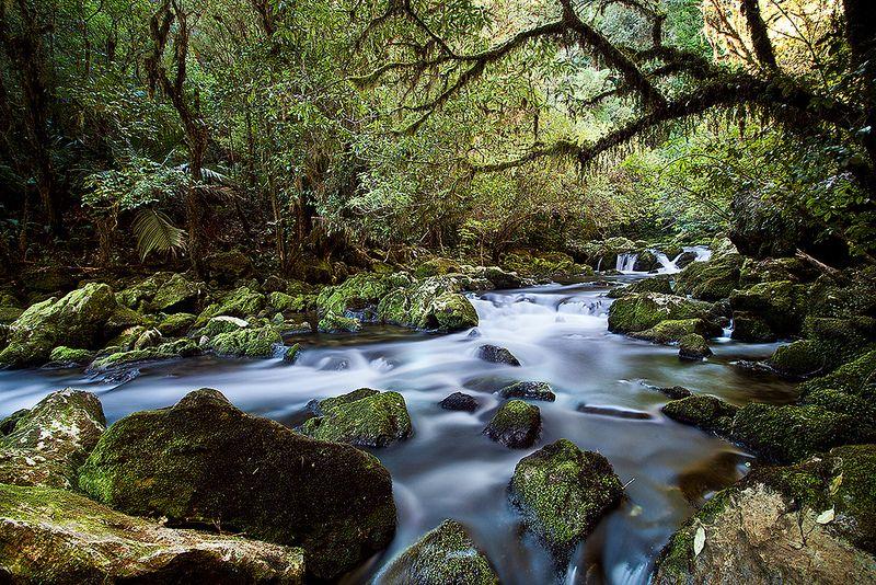 Riwaka Resurgence revisited Place to shoot, Tasman, 10th