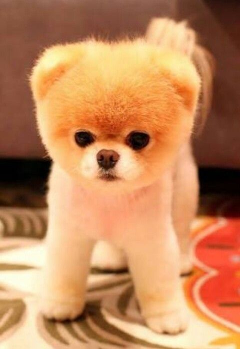 Simple Puppy Chubby Adorable Dog - 25e04cce9f67a51053cf12c837d09367  Graphic_58868  .jpg