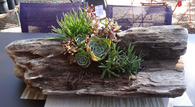 Unique diy home garden decor with a shoe planter and succulents - Garden Gift Diy Succulents In A Driftwood Planter