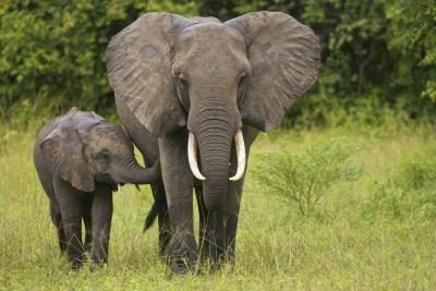 Endangered Animals in the Savanna | Physical adaptations