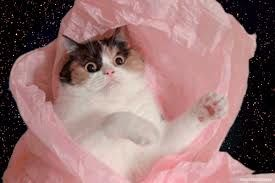 space cat tumblr - Google Search