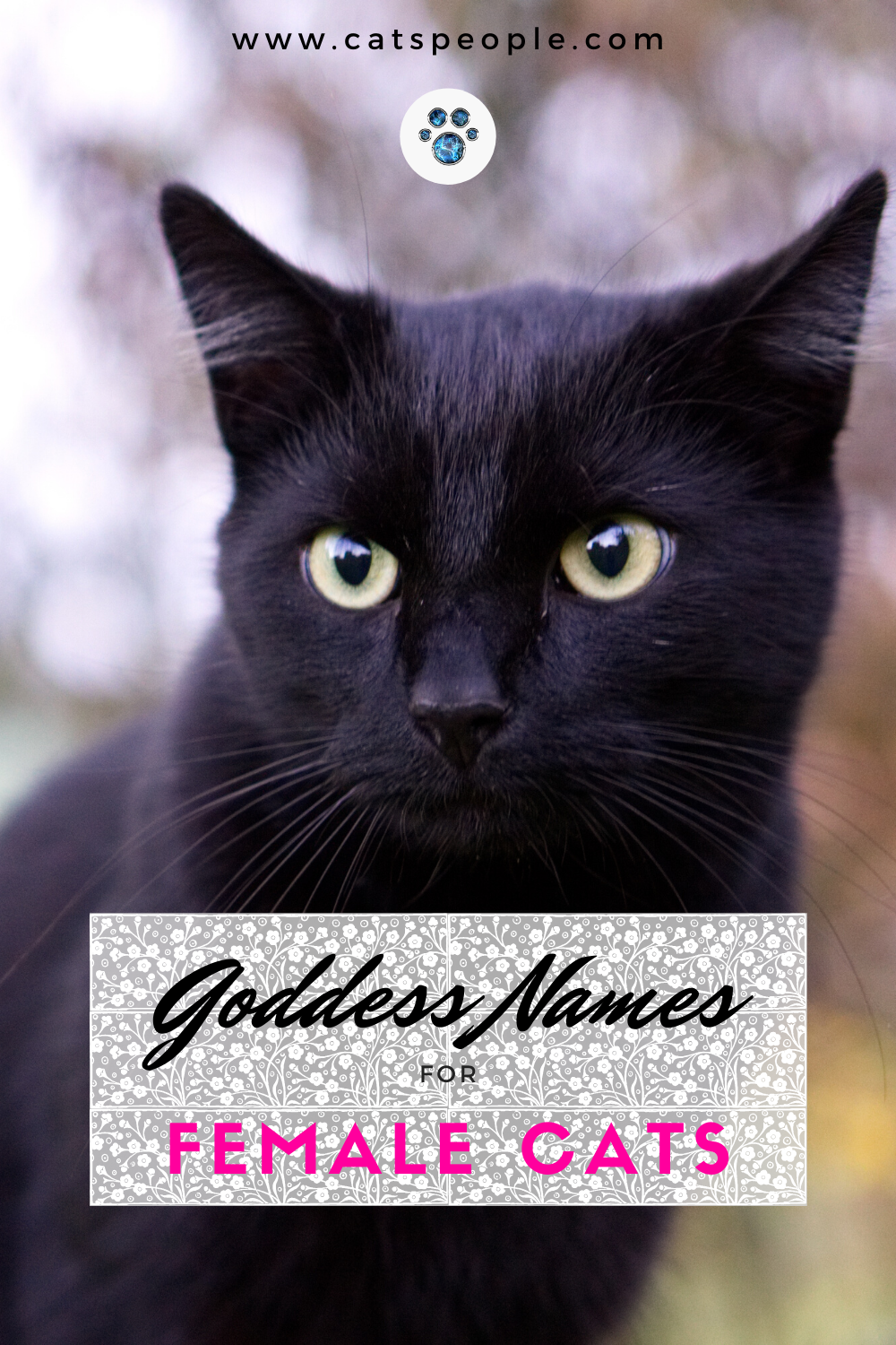15 Goddess Names for Female Cats in 2020 Cat parenting