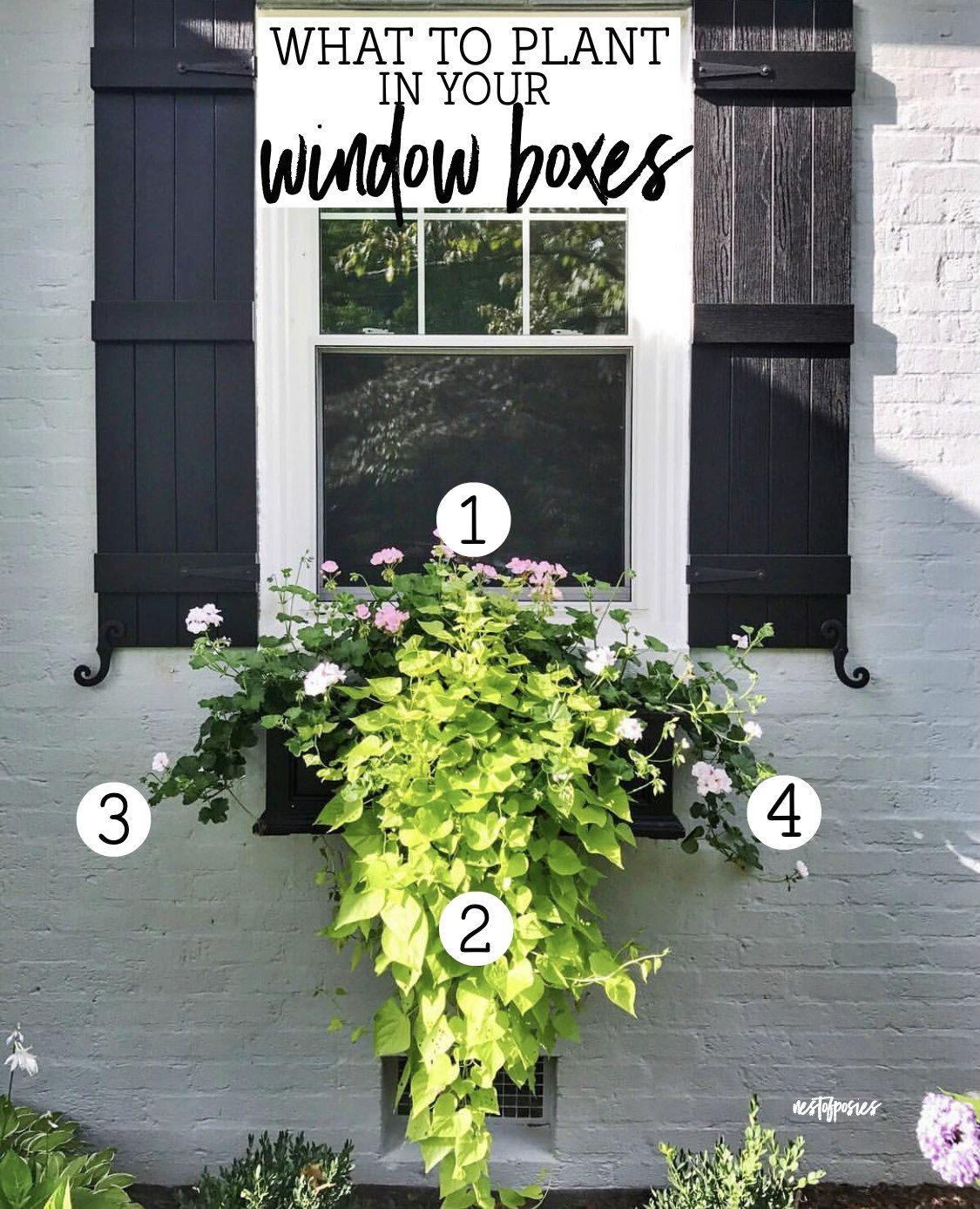 What To Plant In Your Window Boxes Window Box Plants Window Planter Boxes Window Planters