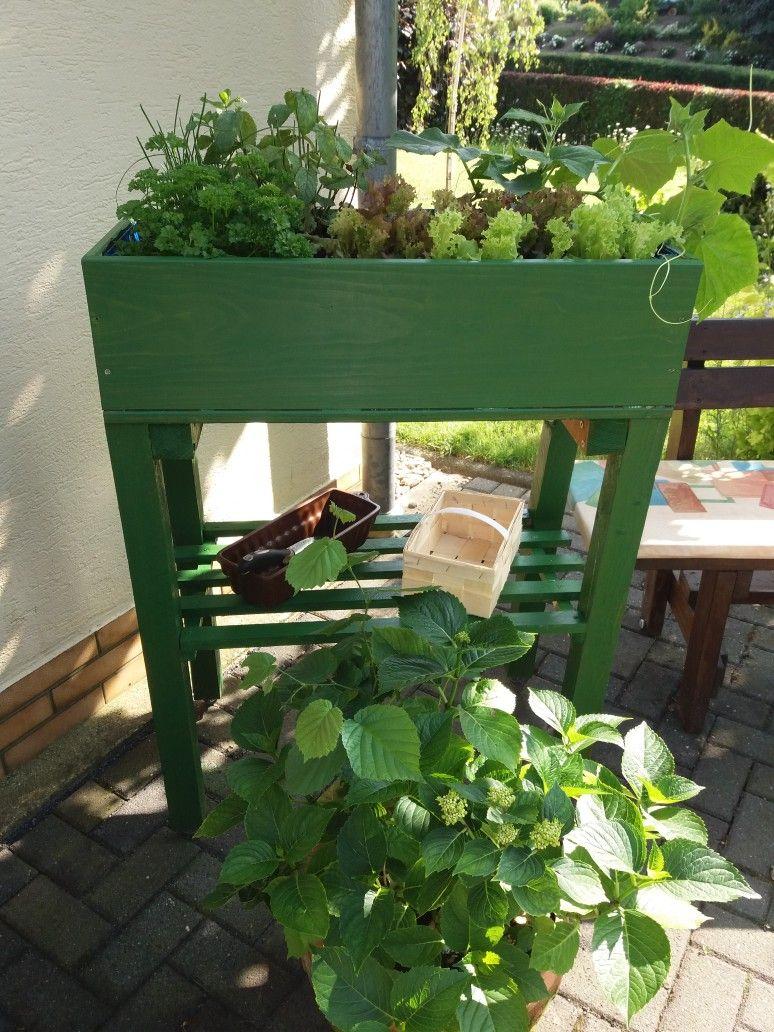 Salat Anbauen Im Garten Tipps Zur Pflege Beliebte Sorten Im Uberblick Krauterpflanzen Salat Pflanzen Herbstgarten
