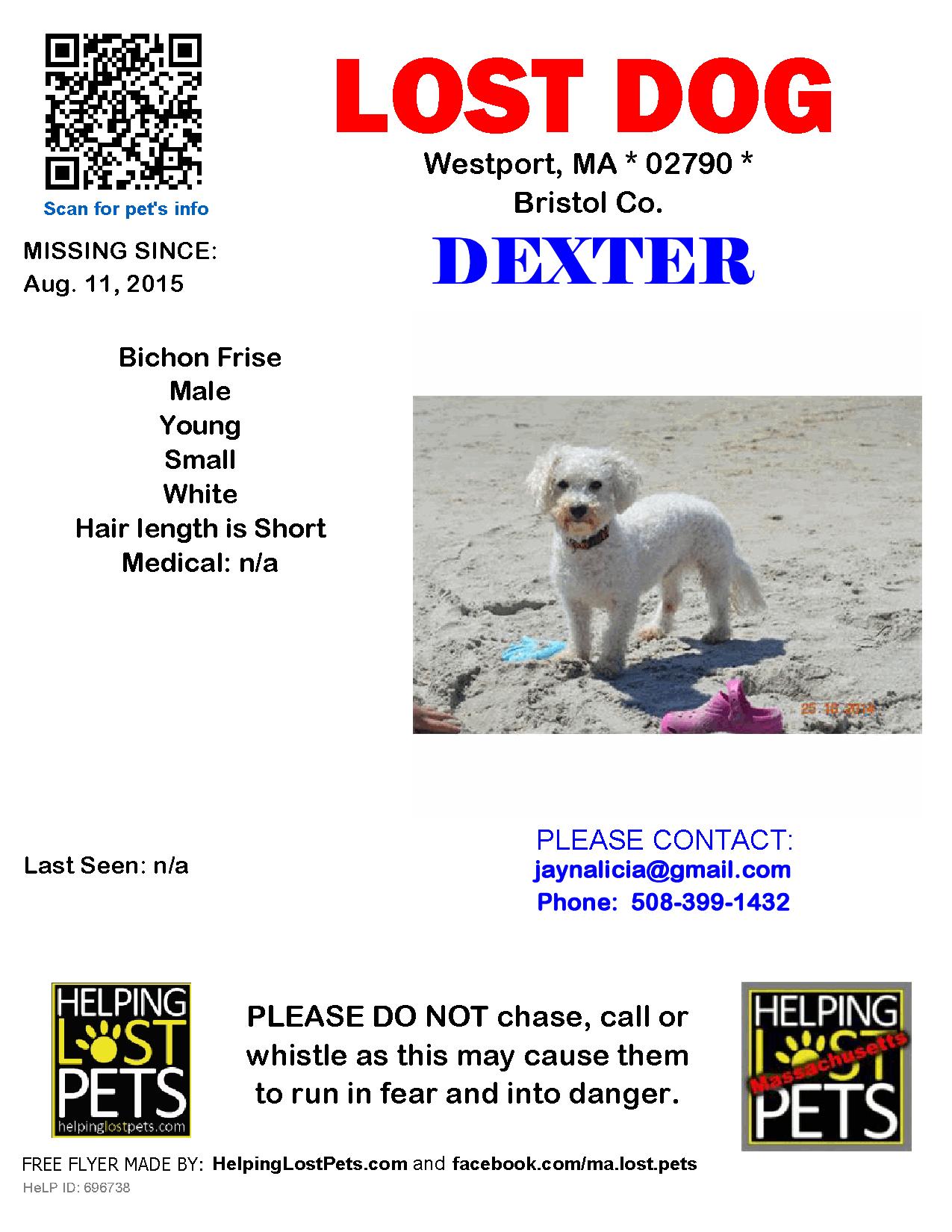 Lost Dog Male Westport Ma Usa 02790 Losing A Dog Bichon