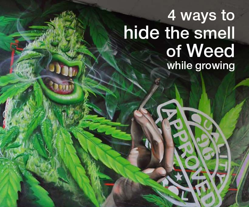 Smart ways to hide the smell of weed while growing marijuana. The most effective way & Smart ways to hide the smell of weed while growing marijuana. The ...