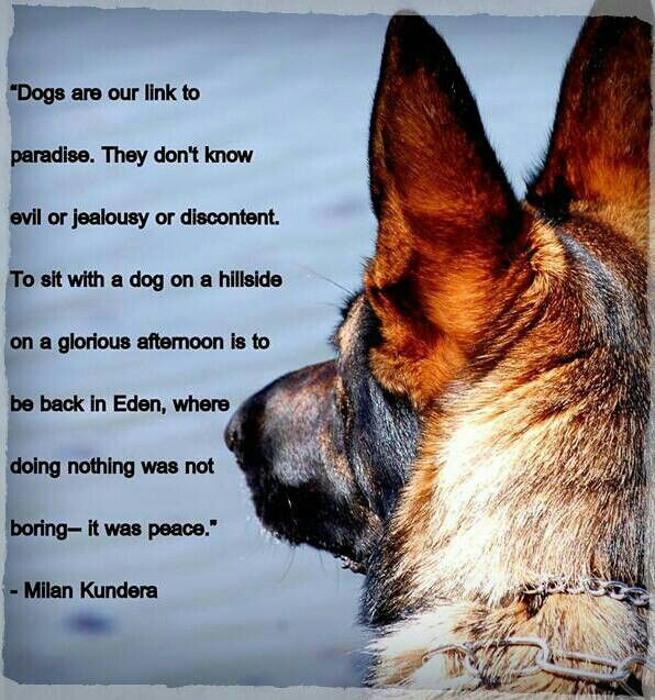 Открытки про собак со стихами, ландшафтного дизайна