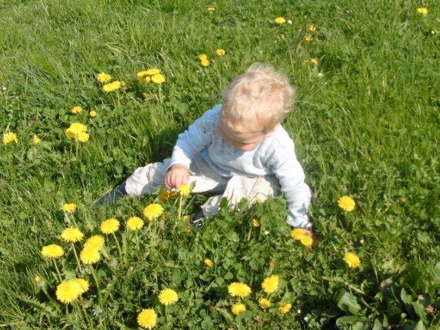Blumen pflücken und die Natur erforschen.