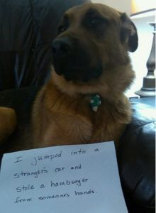 Cute Dogs For Your Monday Blues – Dog Shaming | Michael Bradley - Time…