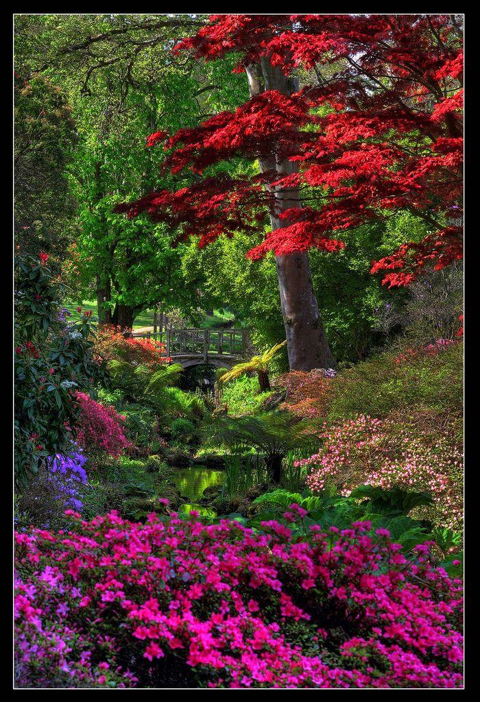 Japan Garden Flowers: Exbury Gardens, New Forest, Hampshire