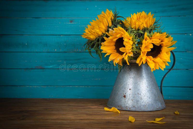 Sunflower In Metal Vase Fresh Sunflower Flowers In Rustic Antique Vase On Woode Ad Fresh Sunflower Va Rustic Background Antique Vase Sunflower Canvas
