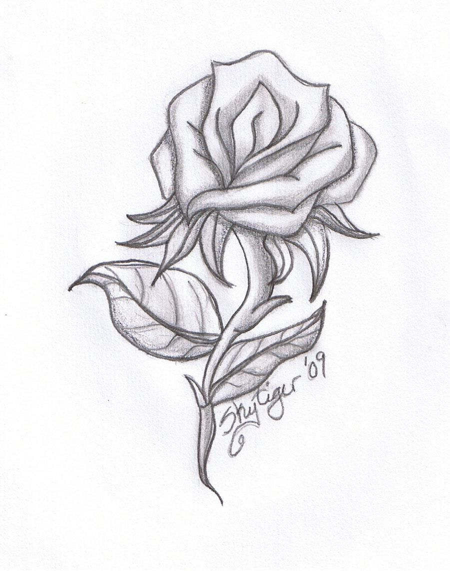 Love Roses Drawings Step By Step Hd Background 9 HD