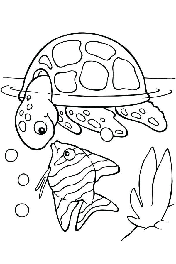 Turtle Coloring Pages Ideas Portraits