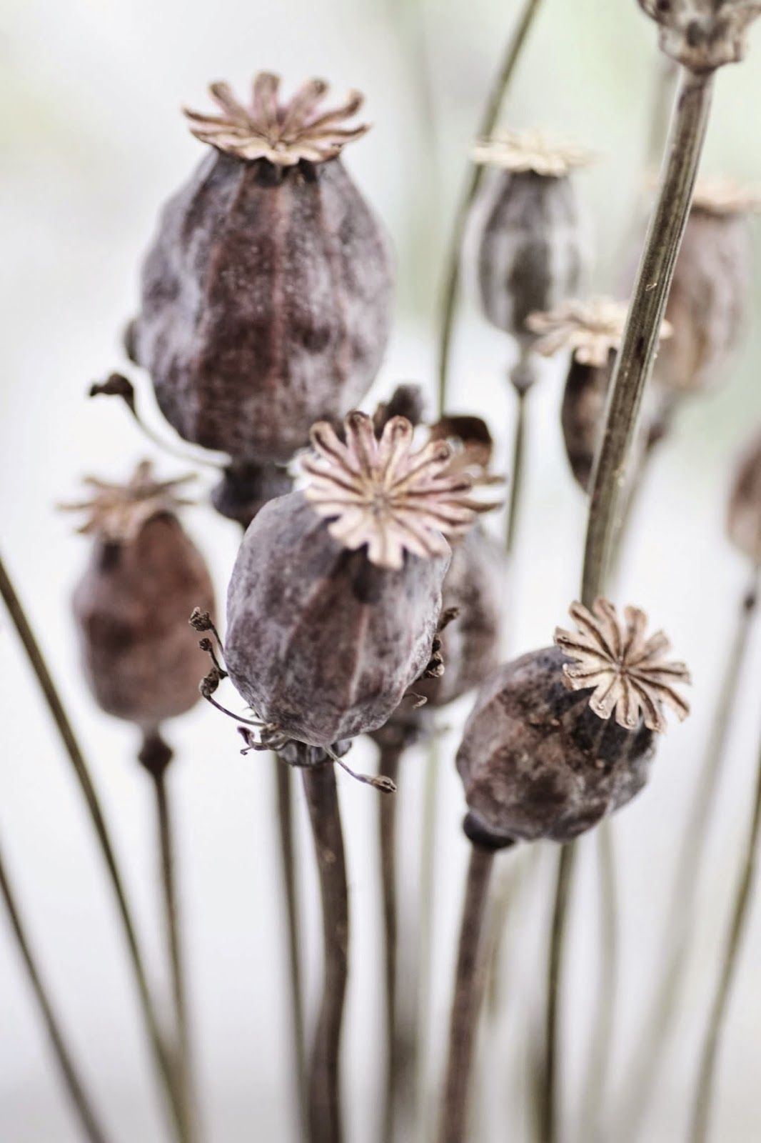 Landet jrna stockholm via heimelig blog reftotrain pinterest its fun to dry poppy heads and stems for decorations easy to dry by hanging and then can be spray painted a color you like for an accent mightylinksfo Gallery