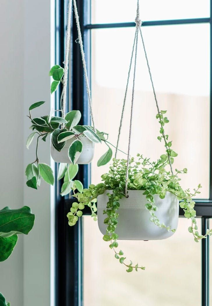25 Holiday Gift Ideas Under $25 is part of Hanging plants, Hanging planters, Hanging plants indoor, Hanging plants diy, Hanging plants outdoor, Planters - Parents  Siblings  Besties  Your S O  Your dog  The list of people to buy gifts for goes on and on  You could trim it down…or you could stick to a budget with these 25 gifts in the $25 range  Have at them
