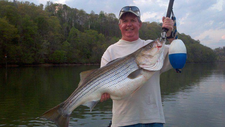 Norris Lake Fishing