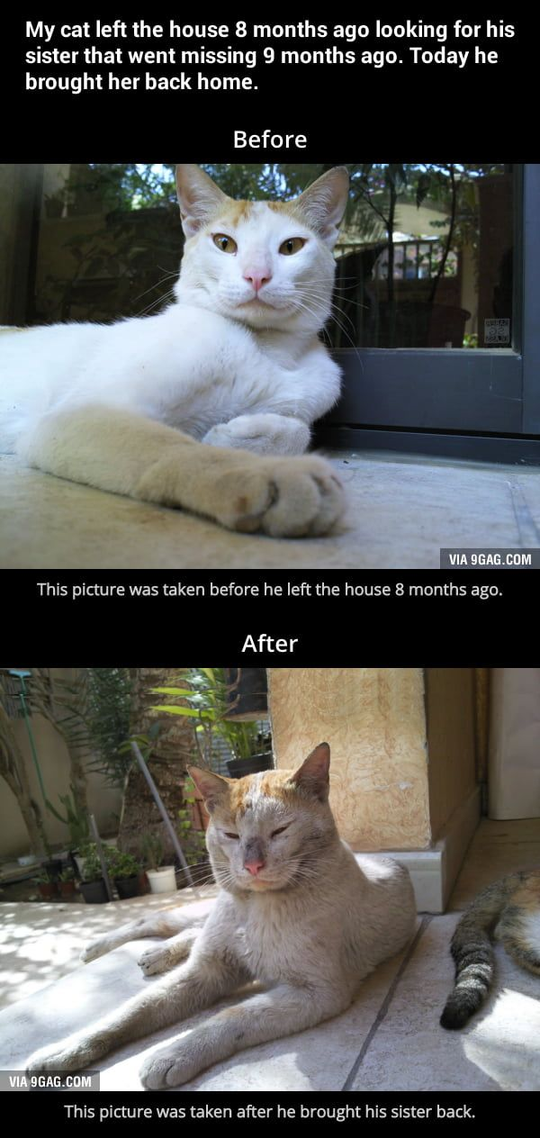 More Memes Funny Videos And Pics On 9gag Cute Animals Funny Animals Cats