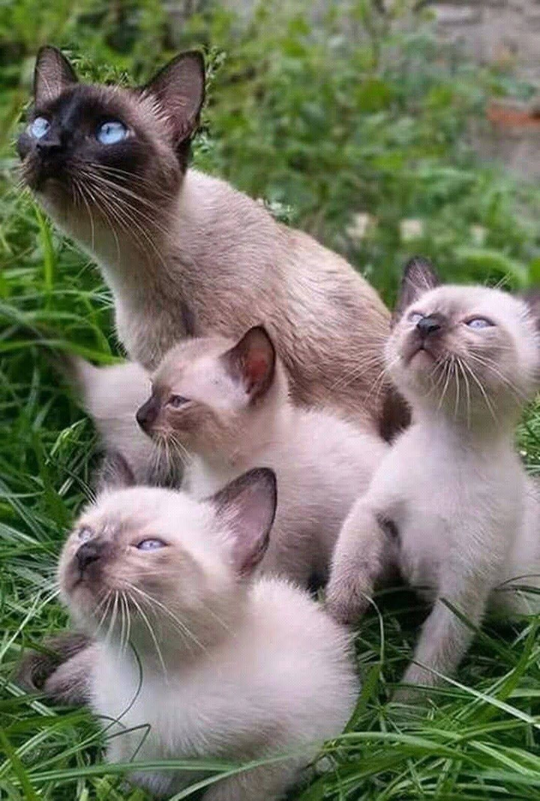Pin By Jennifer Fireball On Cat Funny Animals Funny Animal Pictures Cute Cats And Kittens