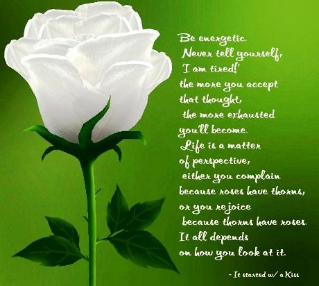 Image Result For Beautiful Love Quotes With Flowers Motivational Fascinating Love Images With Quotes On Flowers