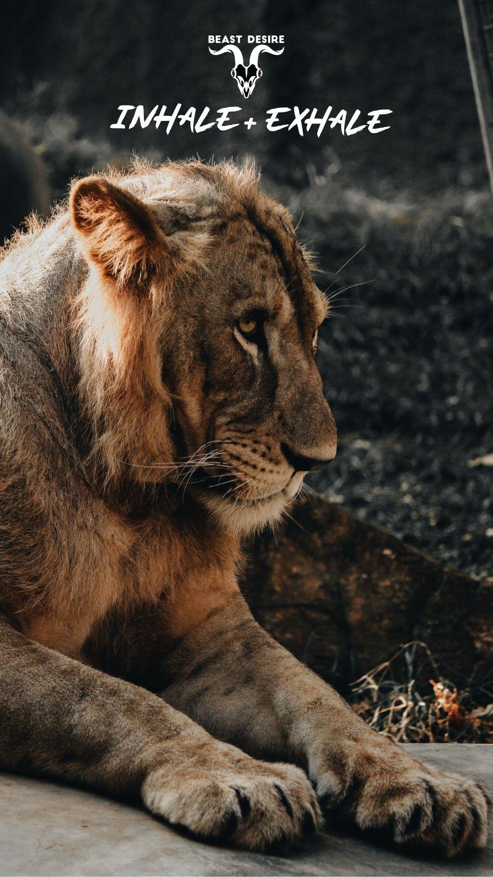 Beast Desire Wallpaper Beast Cat Spirit Motivational Quotes Wallpaper