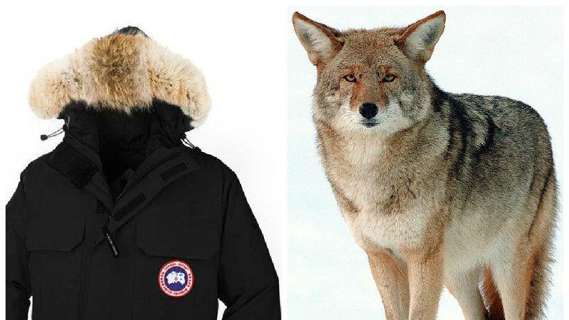 canada goose real fur