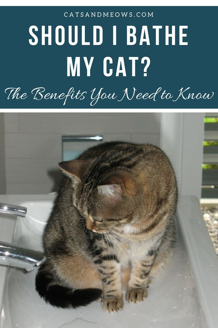 Should I Bathe My Cat The Benefits You Need To Know With Images Cat Care Cats Cat Grooming