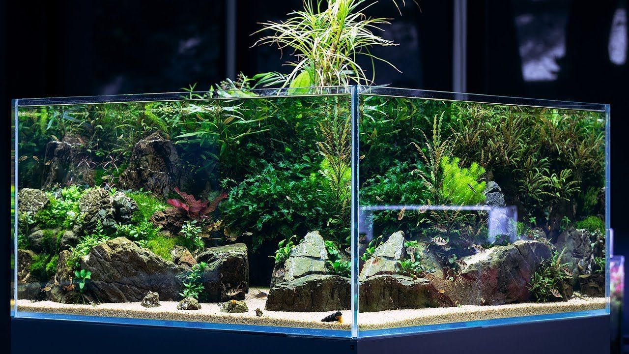 BEAUTIFUL AQUASCAPE with 360 view - Cinematic short by ...