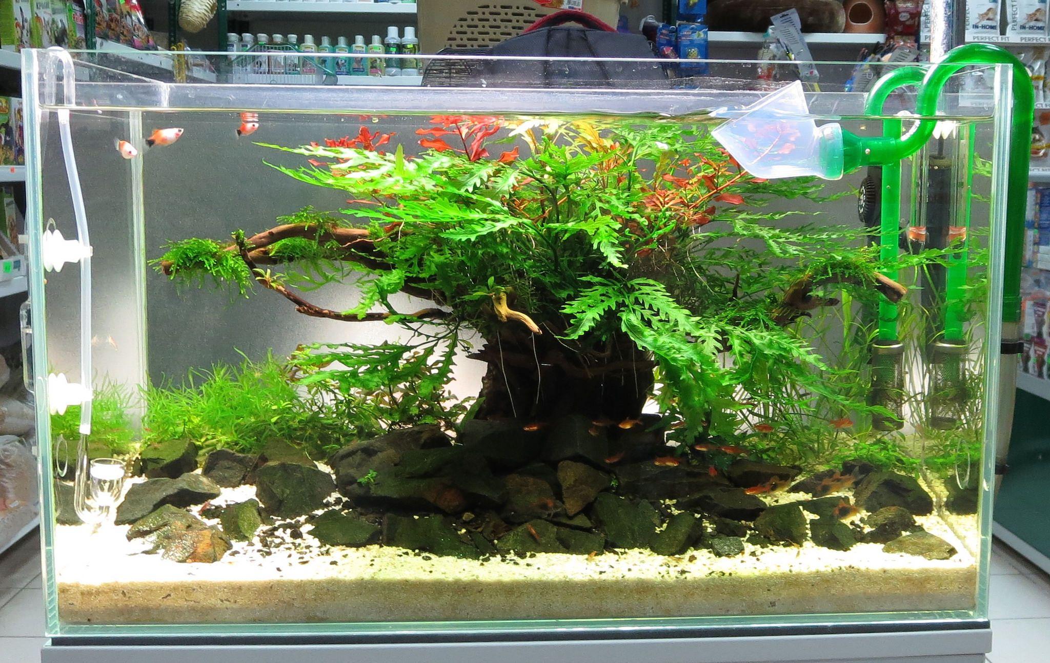 60X30X36  2 Months - Change And Aquariums