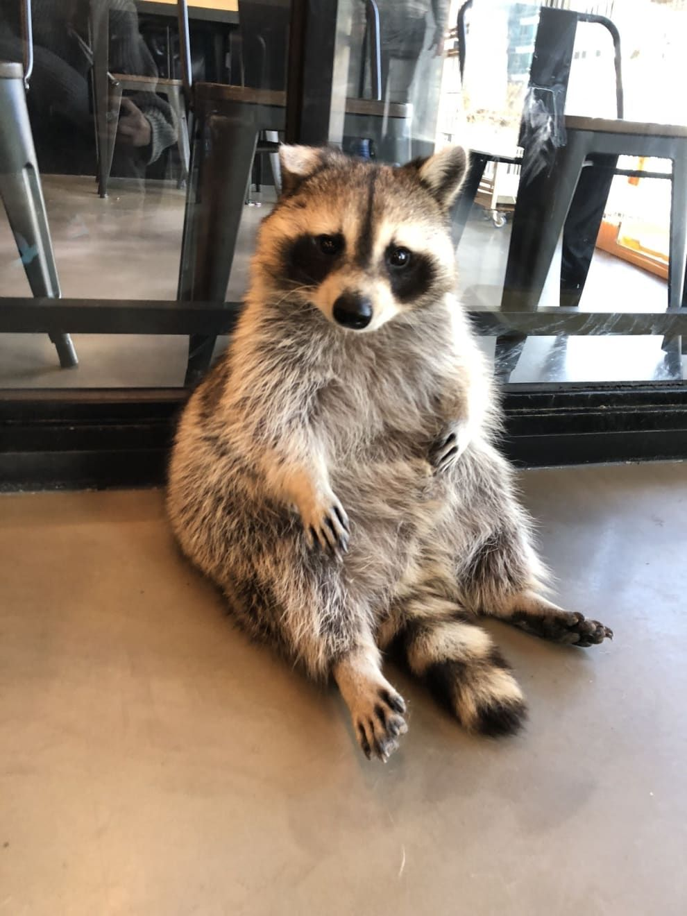 There's Literally A Raccoon Cafe In Seoul, Korea And It