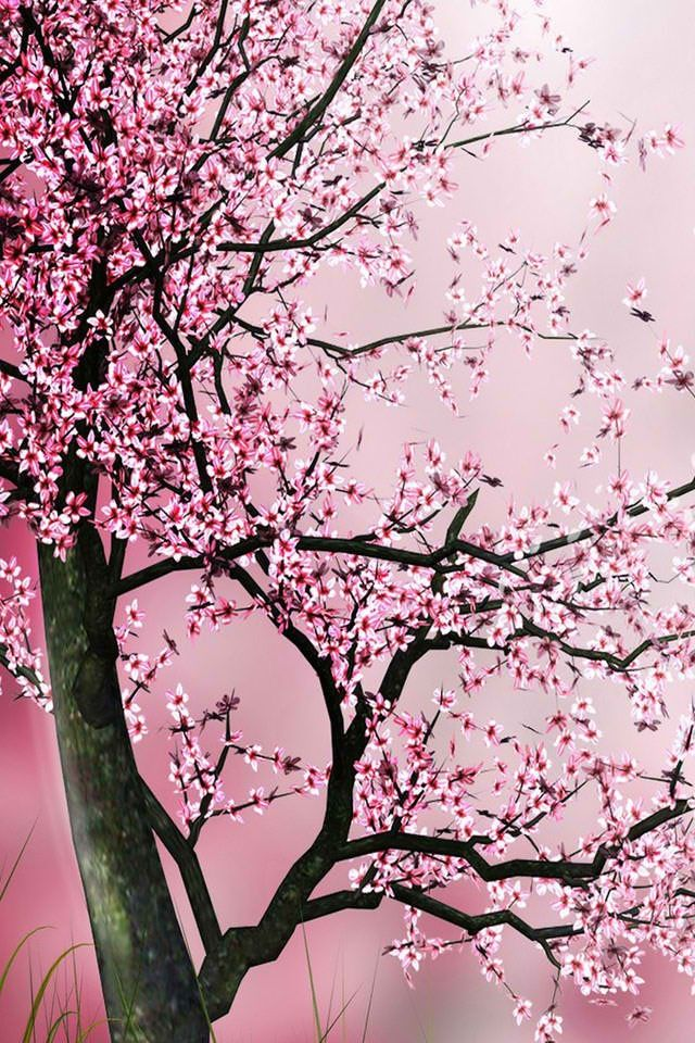 Cherry Tree Iphone Wallpaper Iphone Pinterest Cherry