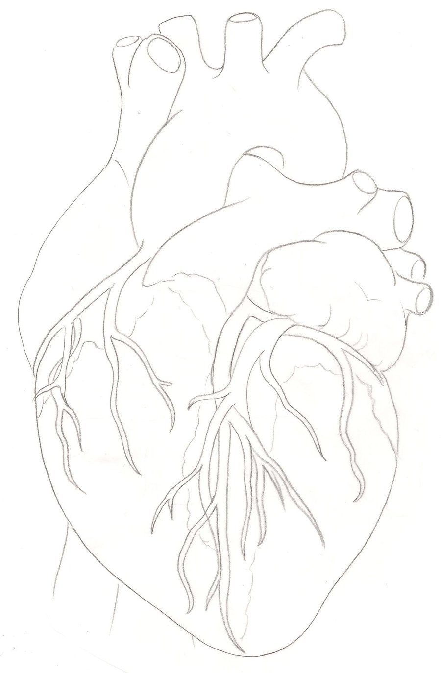 Human Heart Tattoo by ~Metacharis on deviantART | art | Pinterest ...