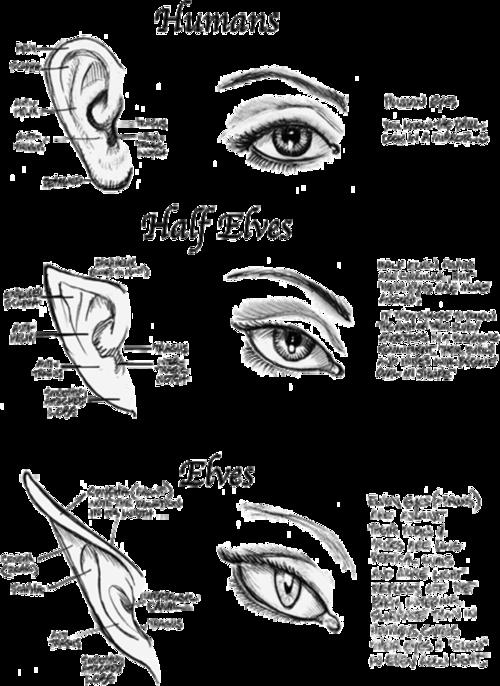 half elves elves eyes and ears art drawing tutorial