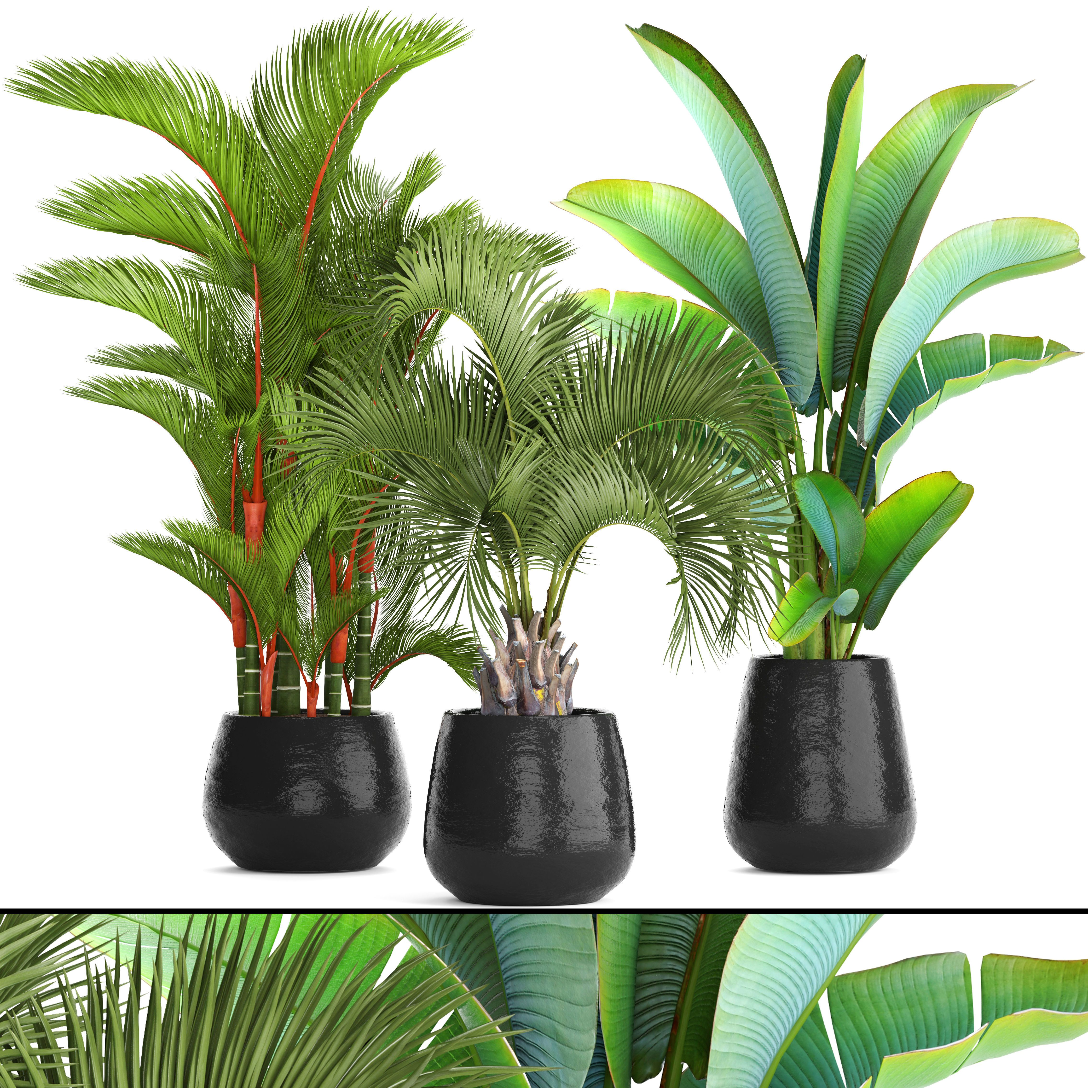 3d Plants Model 340 Free Download | Plant | Plants, Model, Free