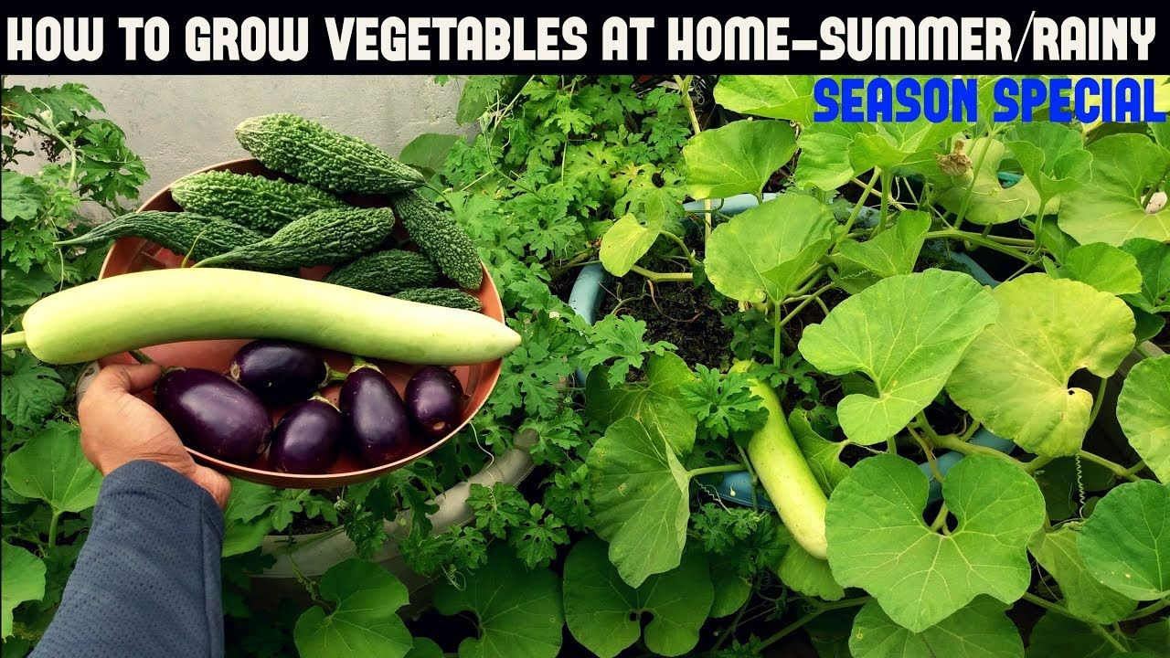 How To Grow Vegetables In Containers Summer Rainy Season 400 x 300