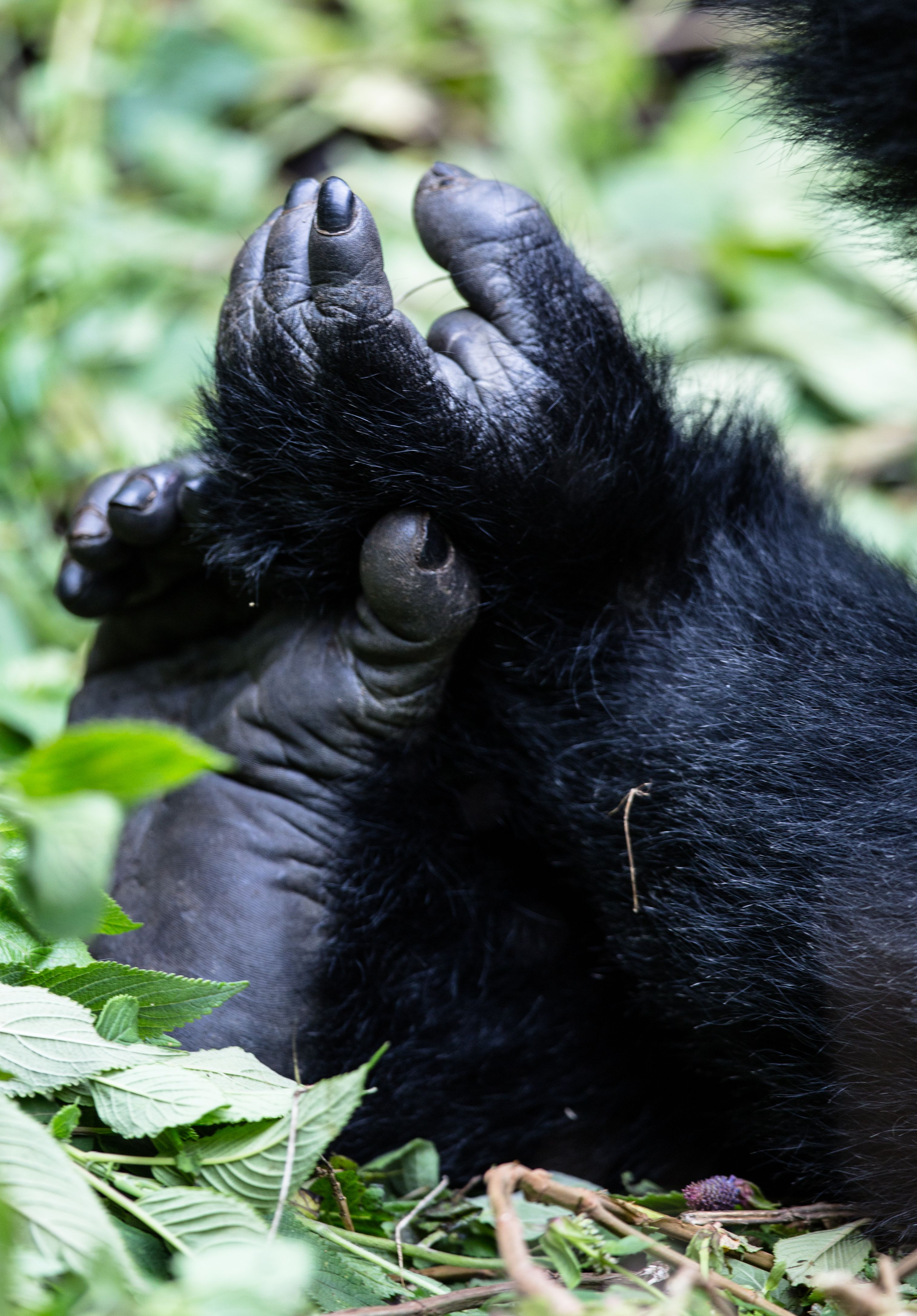 50 Gorillas, Chimps & Monkeys images   primates, gorilla, chimp