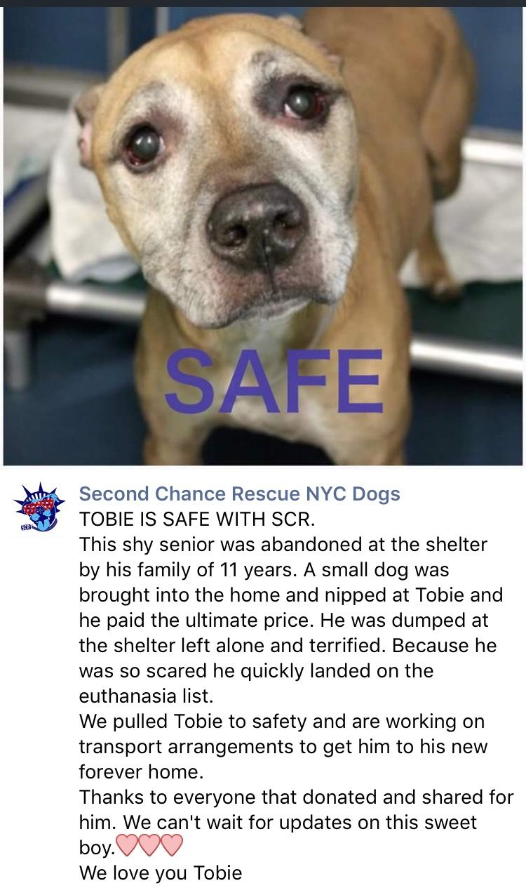 7 28 16 Thank You Ij Nyc Dogs Shelter Dogs