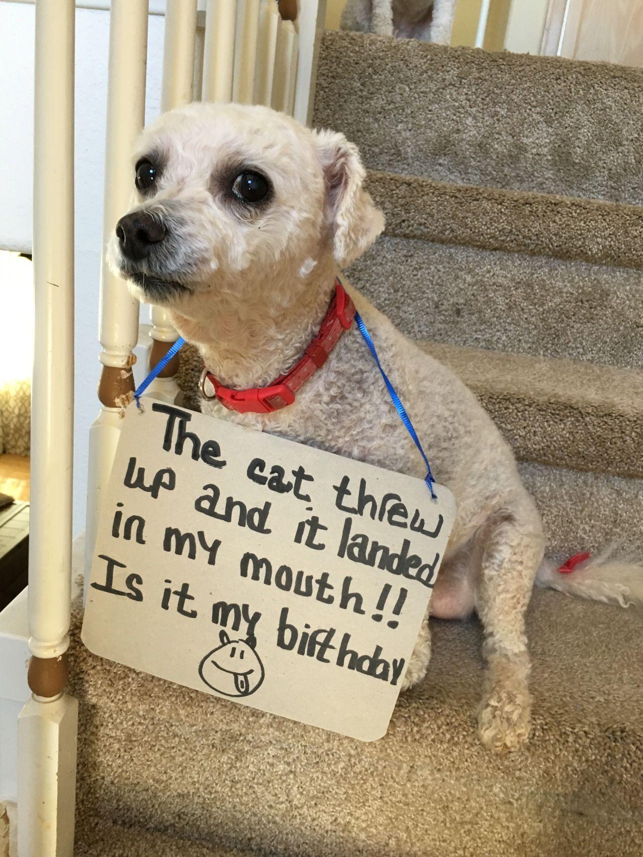 Dog Throwing Up Meme : throwing, Threw, Landed, Mouth!!, Birthday?, Shaming,, Shaming, Funny,, Throwing