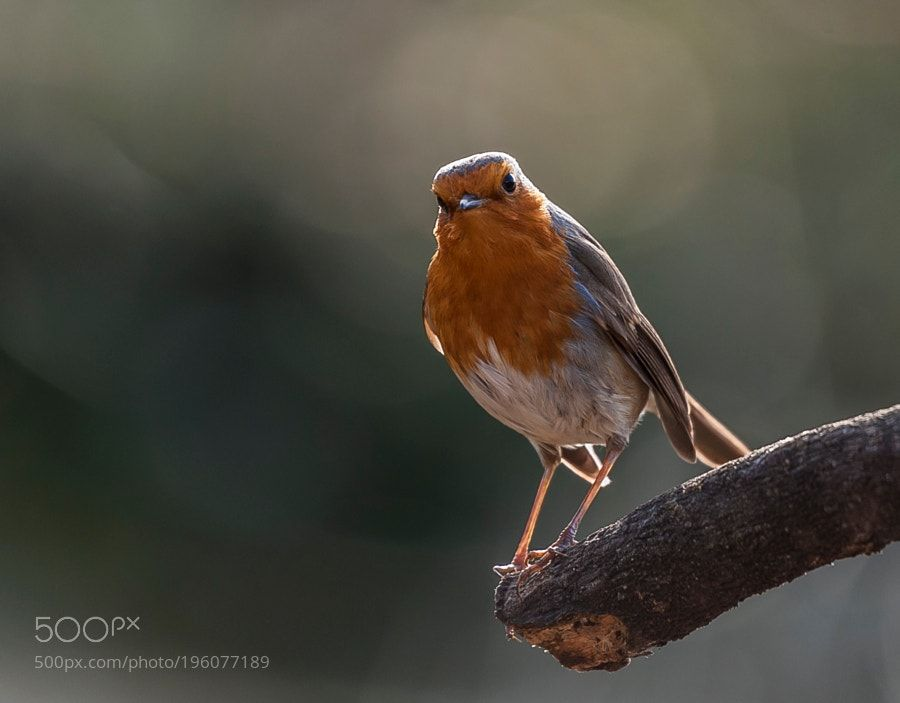peti by juanlugarcia830 #animals #animal #pet #pets #animales #animallovers #photooftheday #amazing #picoftheday
