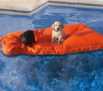 Puppy pool pads  Pearl would look mighty fine floating around on one of these!!!