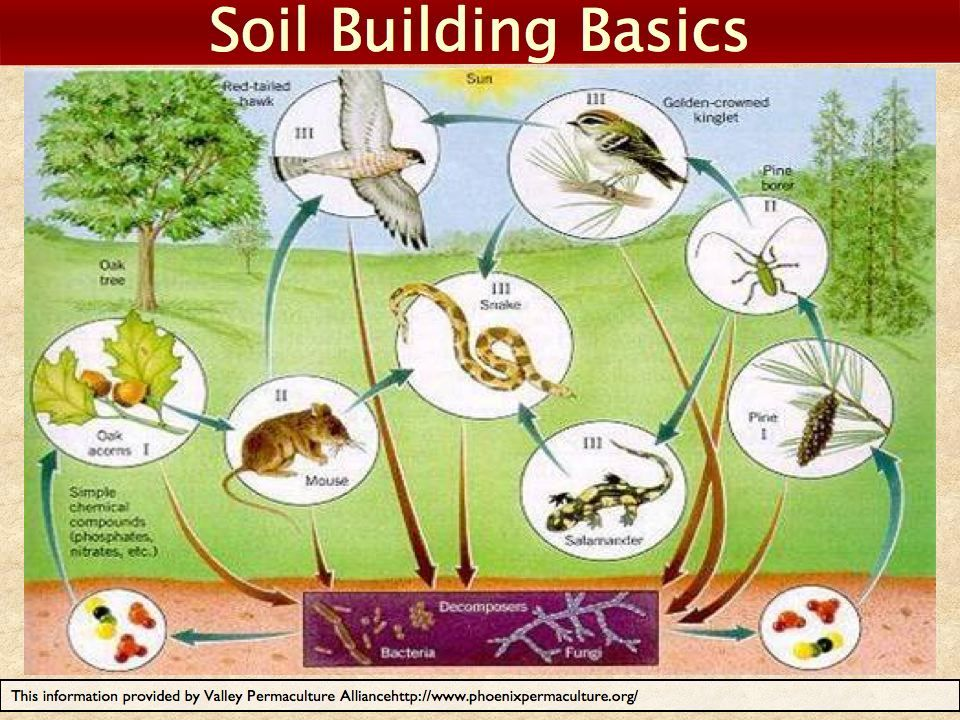 This Is The First Stage Of The Soil Food Web Food Web Nature