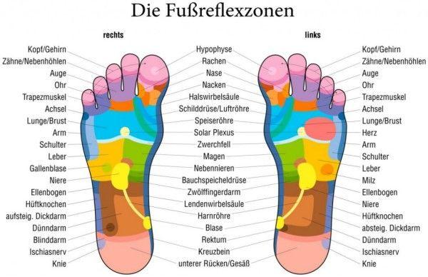 fussreflexzonen | Kräuter | Pinterest | Anatomie, Therapie et Massage