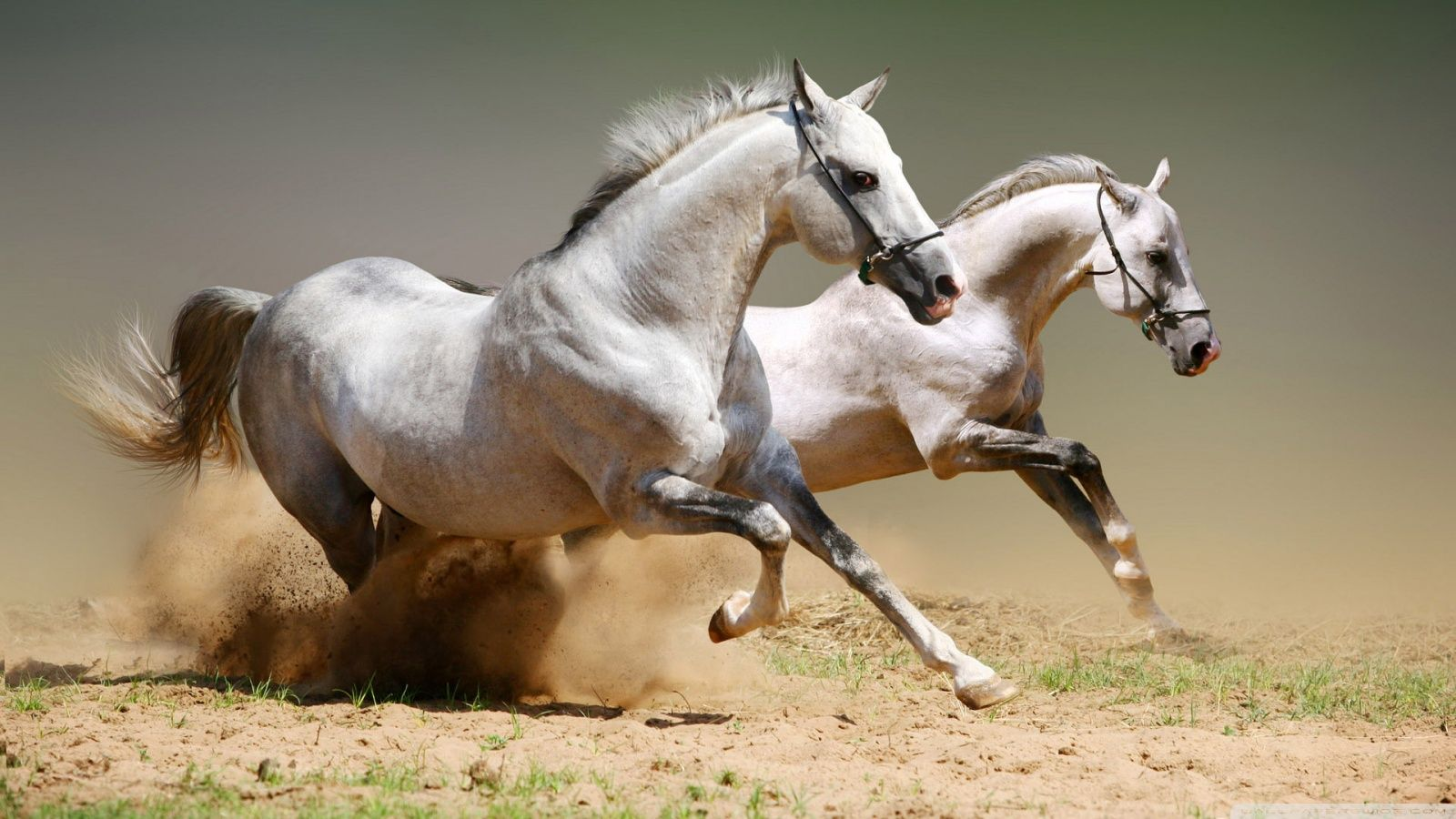 Great Wallpaper Horse Ultra Hd - 25ed334e858862a05052119ca248465b  Pic_605811.jpg