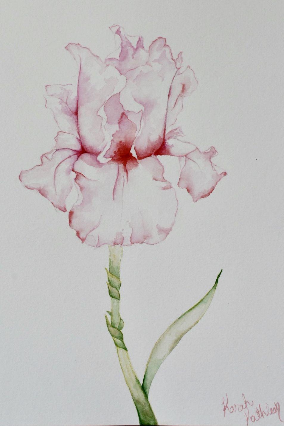 Watercolor Pink Iris Flower By Karah Kathleen Watercolor