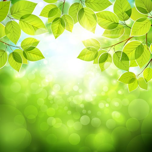 Summer green leaves wi...