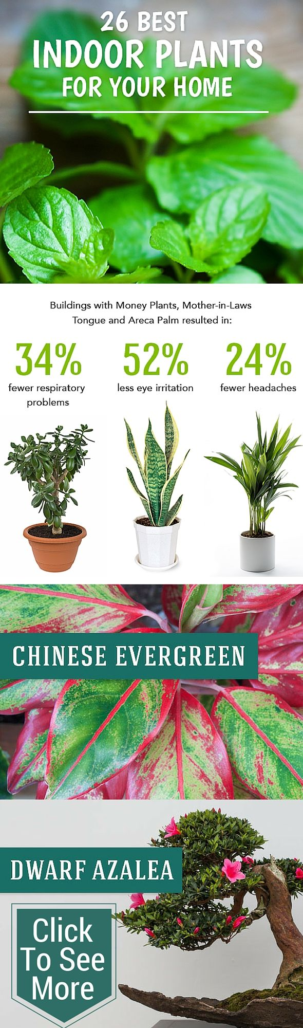 Marvelous Best Indoor Plants To Help Purify Your Air Pinteres Largest Home Design Picture Inspirations Pitcheantrous