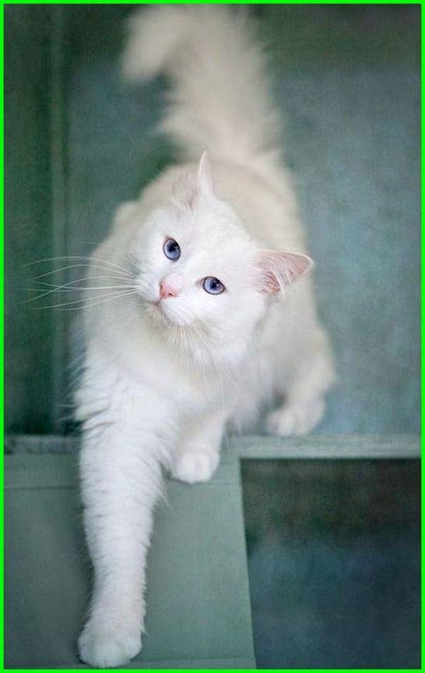 Foto Anak Kucing Anggora Asli Cute Cats Animals Beautiful Cute Baby Animals