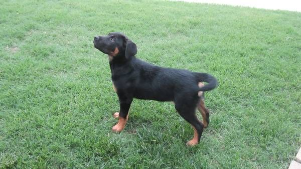 Craigslist Tulsa Pets For Sale By Owner