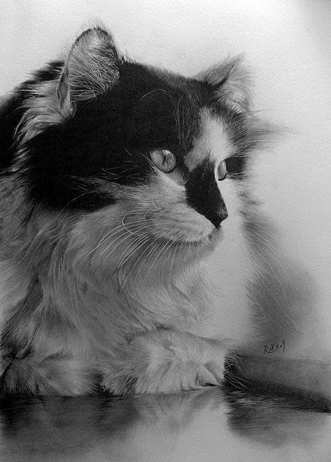 cat+artwork | Amazing Pencil Art: The Cat Drawings of Paul Lung