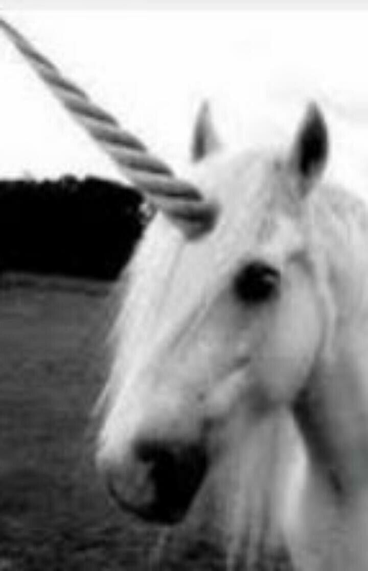 pin by eu on unicórnio pinterest unicorns